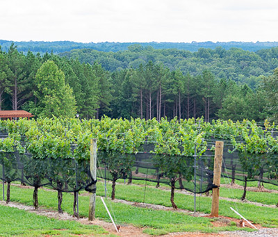 Mountain Brook Vineyard